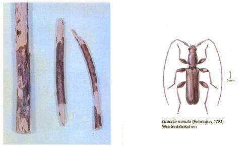 fa parazita rovar honnan származnak a férgek